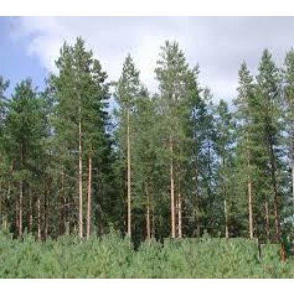 Darmowa BIOMASA z drzew iglastych lub wycinka na Stemple