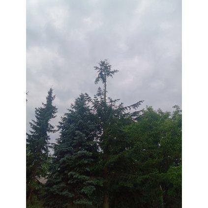 Wycinka drzew metodą alpinistyczną trudnych i niebezpiecznych